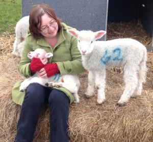 lambs_looking_01